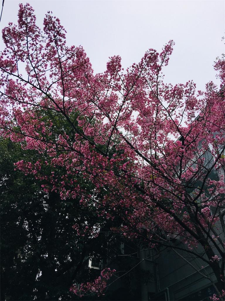 f:id:TokuheiKumagai:20200323202639j:image