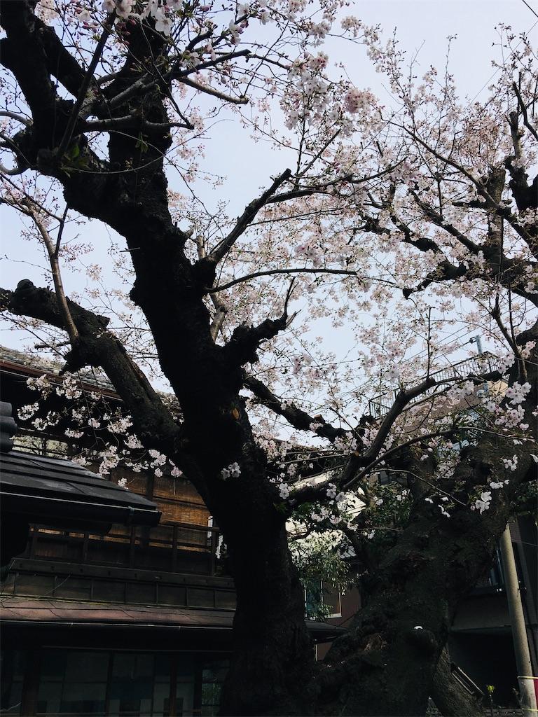 f:id:TokuheiKumagai:20200323202720j:image