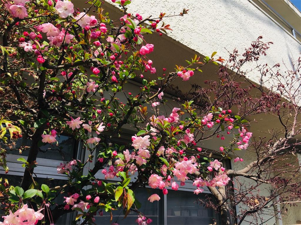 f:id:TokuheiKumagai:20200326205702j:image