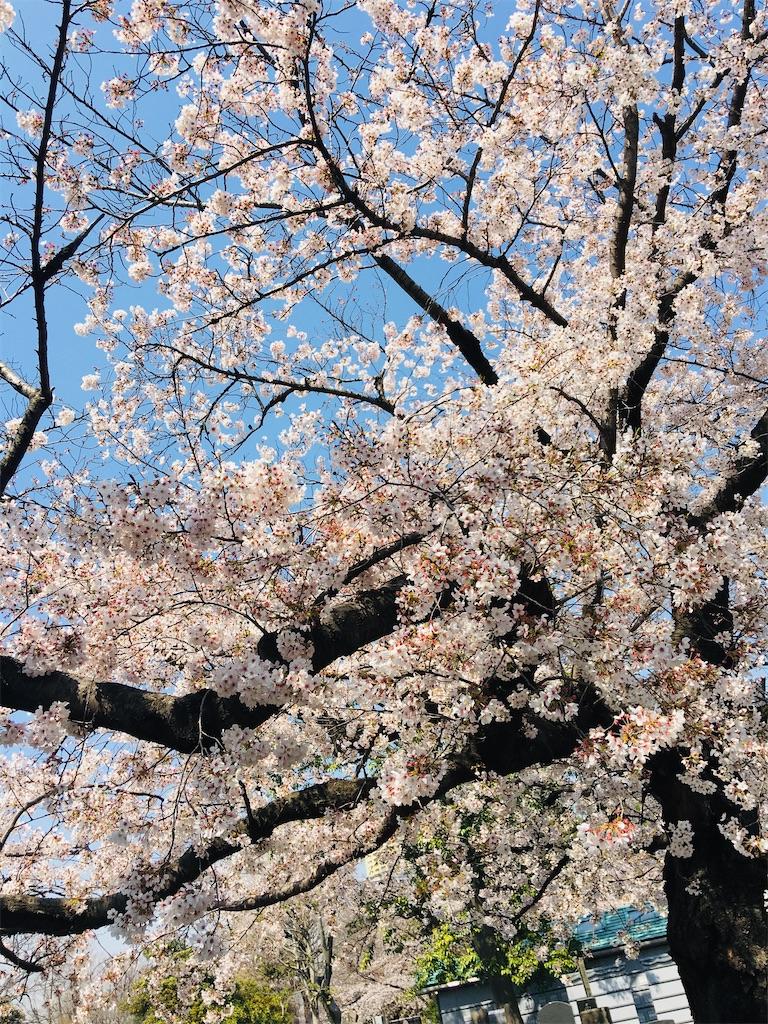 f:id:TokuheiKumagai:20200326205715j:image