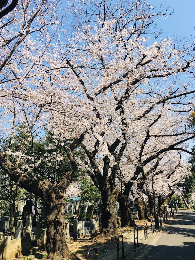 f:id:TokuheiKumagai:20200326205804j:image
