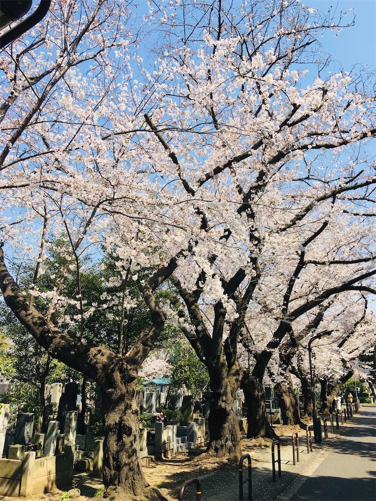 f:id:TokuheiKumagai:20200326205810j:image