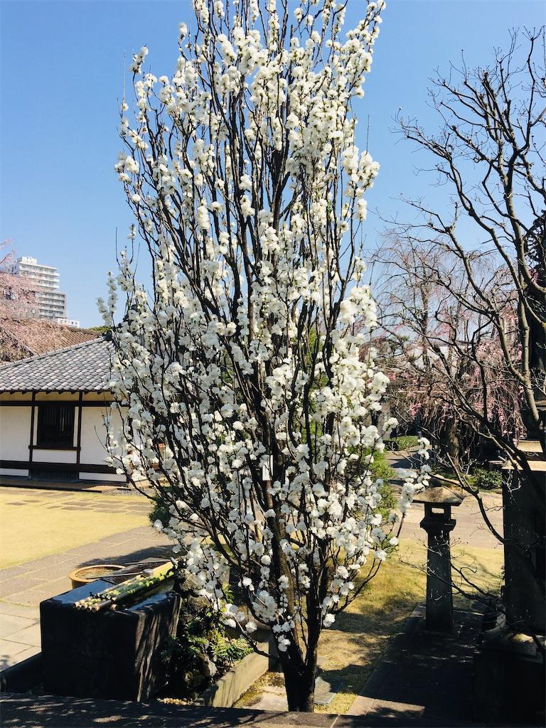 f:id:TokuheiKumagai:20200326205901j:image