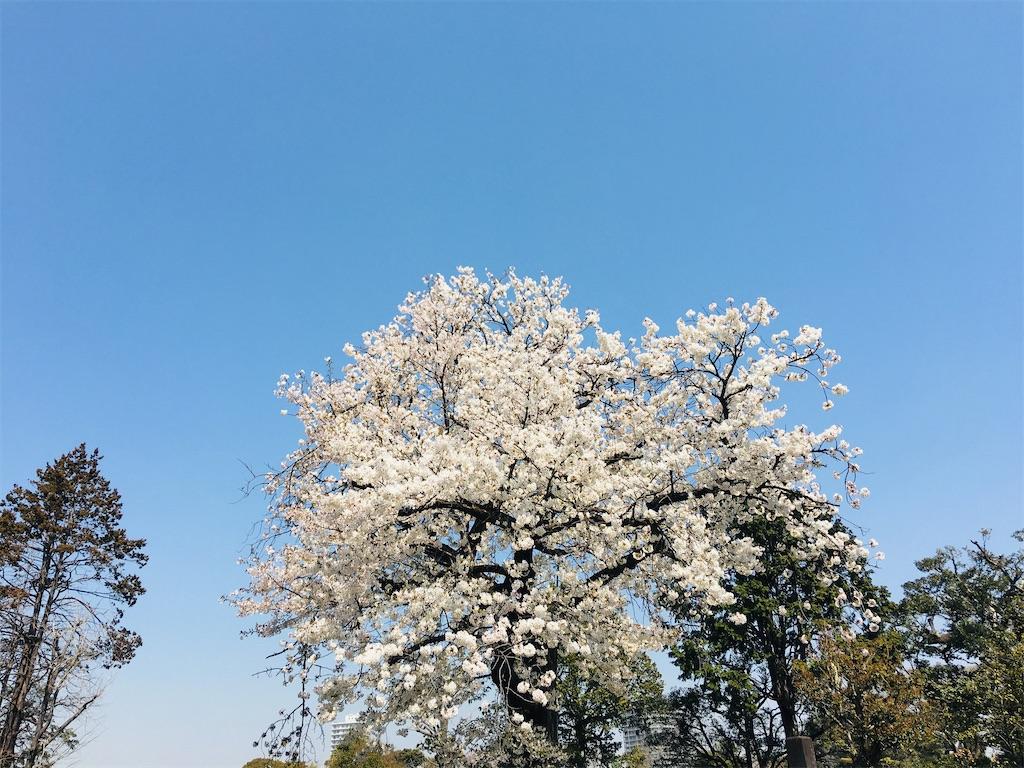 f:id:TokuheiKumagai:20200326205909j:image