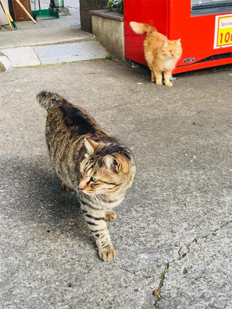 f:id:TokuheiKumagai:20200326213641j:image