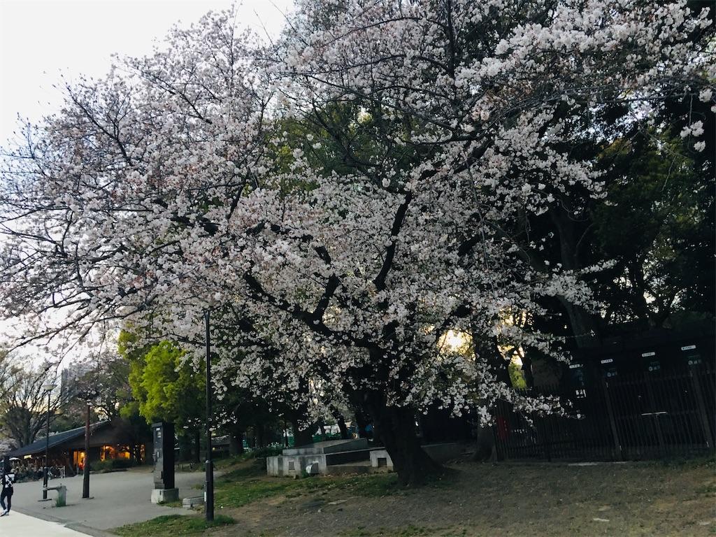 f:id:TokuheiKumagai:20200327215759j:image