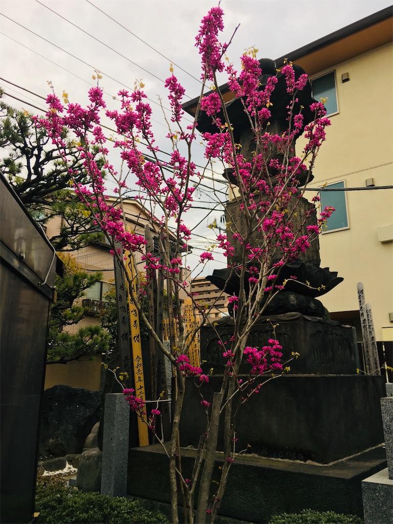 f:id:TokuheiKumagai:20200327215815j:image