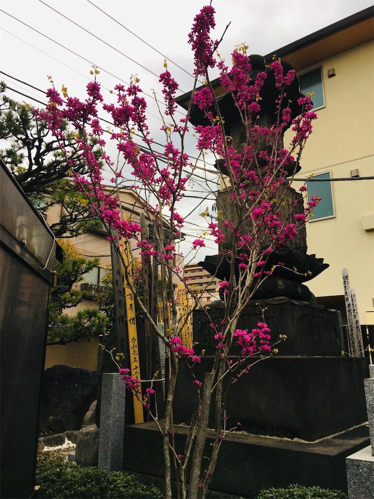 f:id:TokuheiKumagai:20200327215941j:image