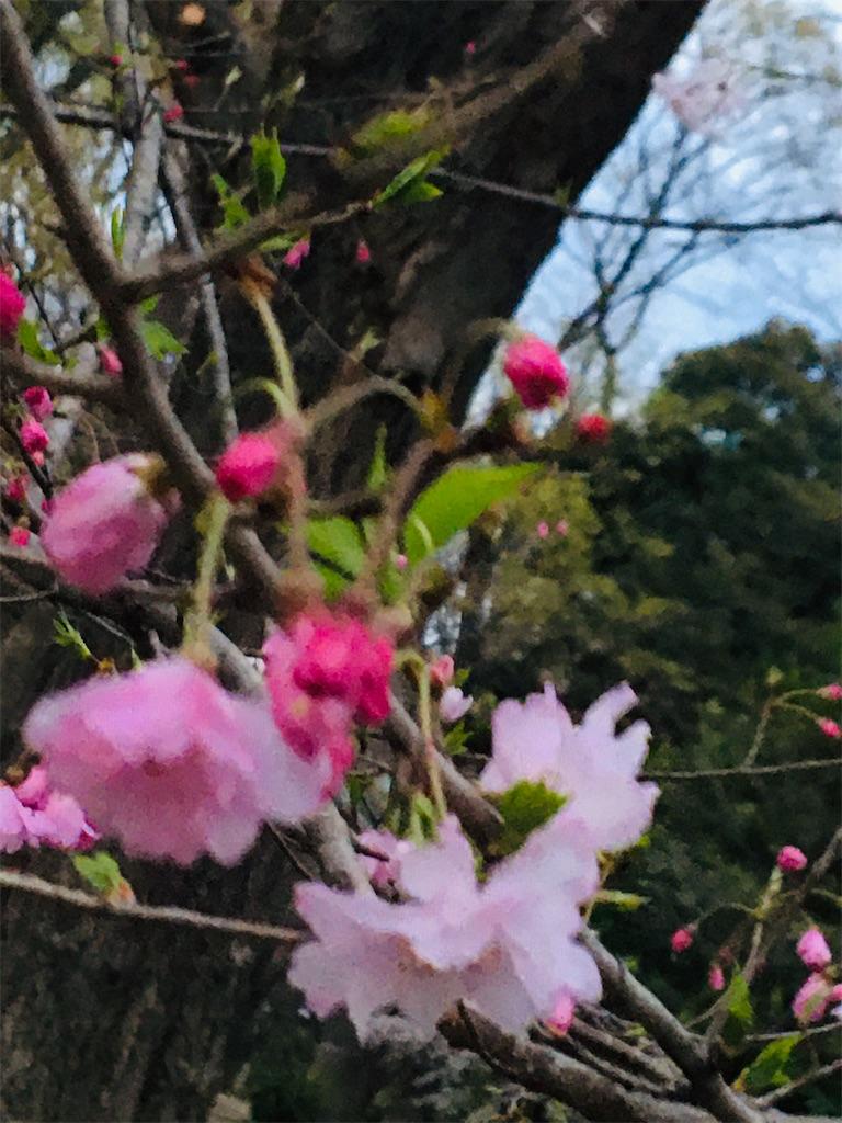 f:id:TokuheiKumagai:20200327220117j:image