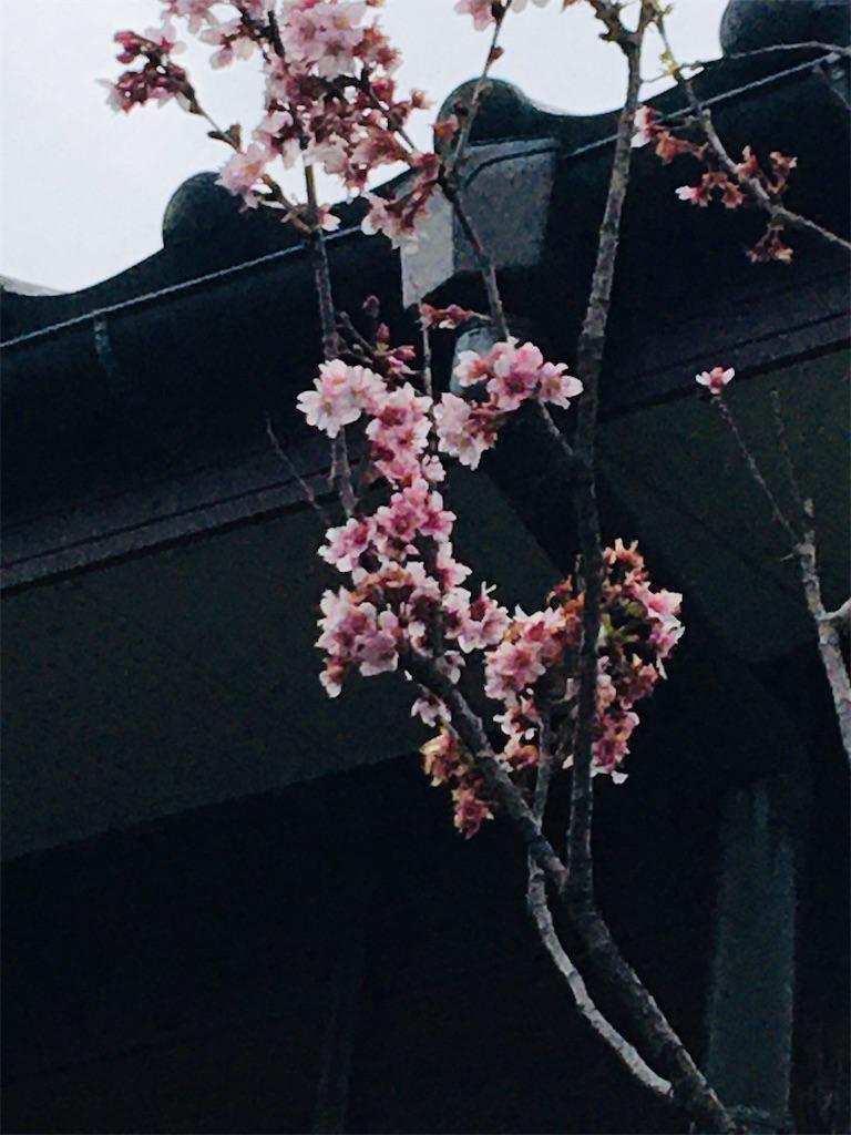 f:id:TokuheiKumagai:20200327220120j:image