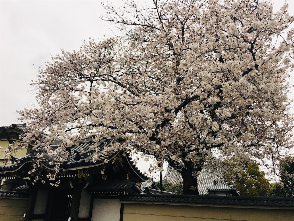 f:id:TokuheiKumagai:20200328182731j:image