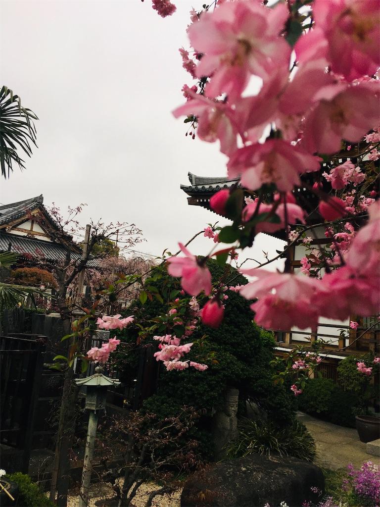 f:id:TokuheiKumagai:20200328182746j:image