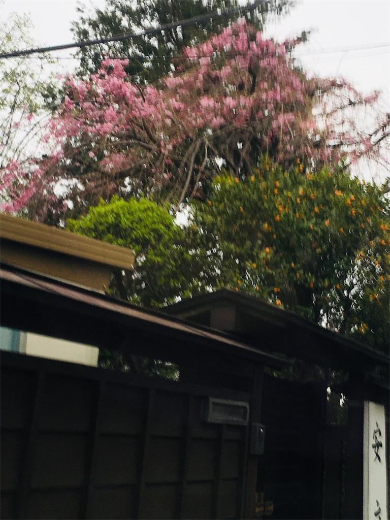 f:id:TokuheiKumagai:20200328182749j:image