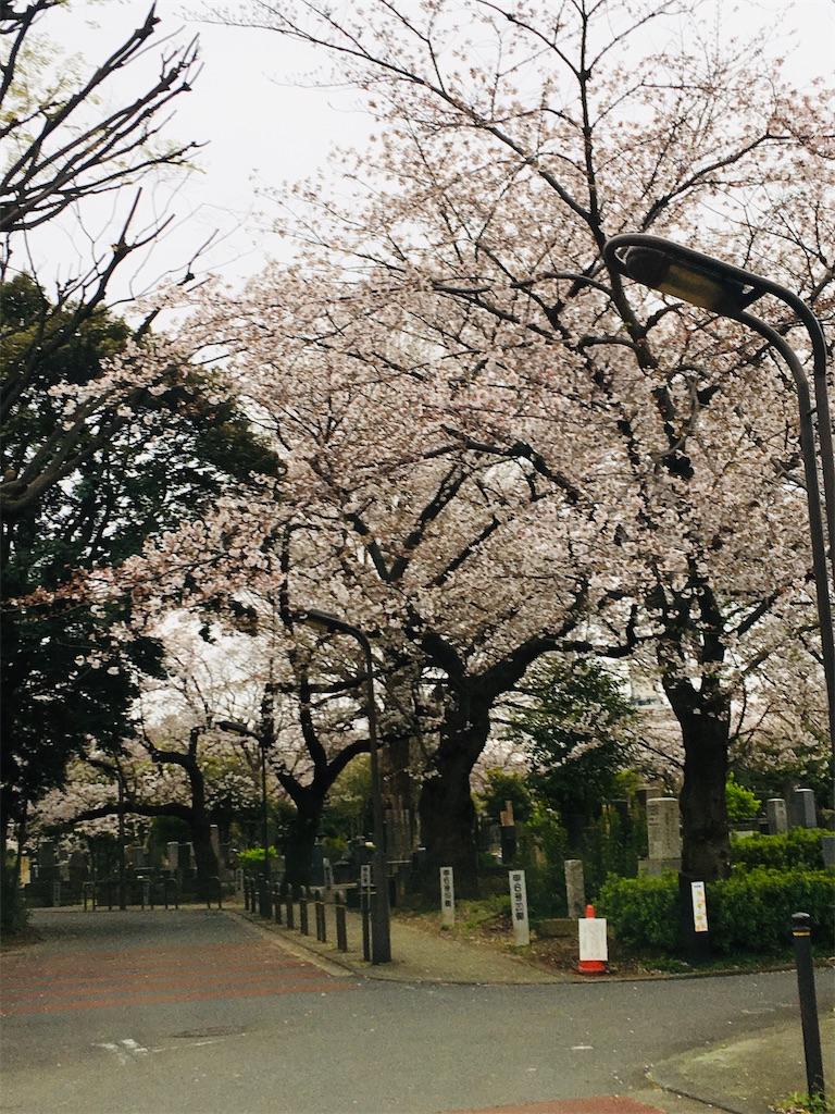 f:id:TokuheiKumagai:20200328182752j:image