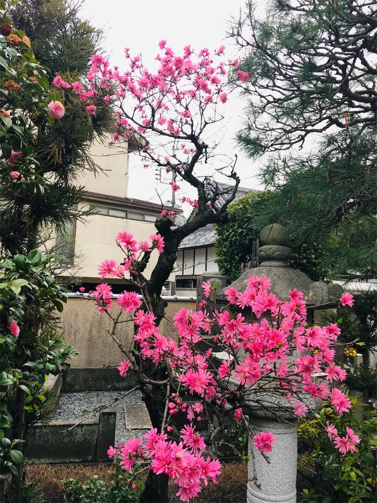 f:id:TokuheiKumagai:20200328182806j:image