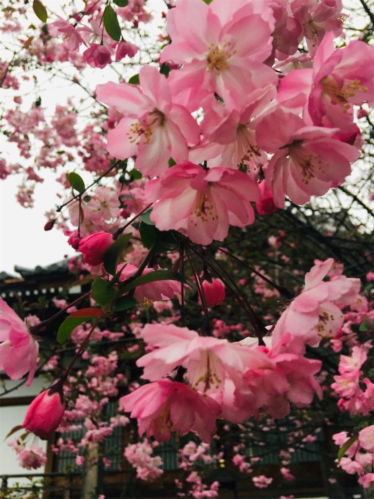 f:id:TokuheiKumagai:20200328182813j:image