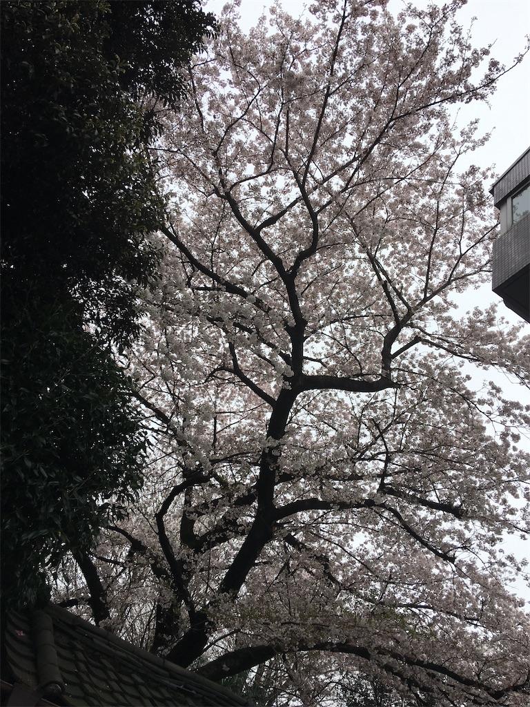 f:id:TokuheiKumagai:20200401004912j:image