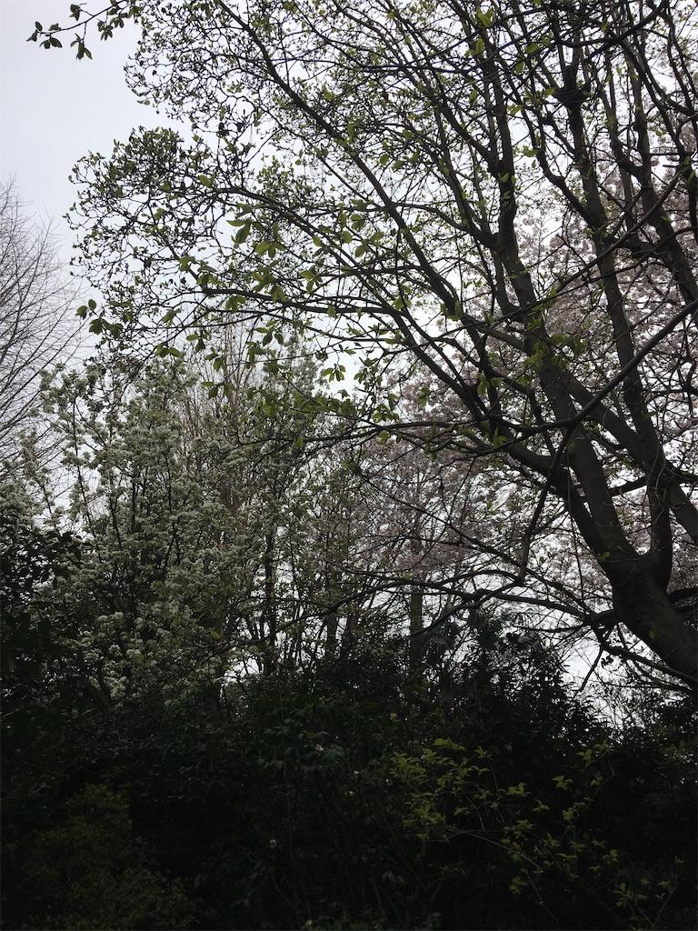 f:id:TokuheiKumagai:20200401004920j:image