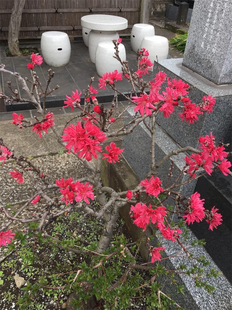 f:id:TokuheiKumagai:20200401004924j:image