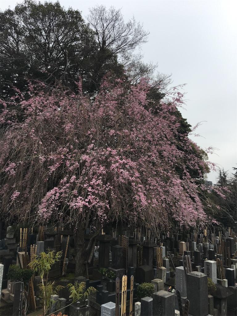 f:id:TokuheiKumagai:20200401004932j:image
