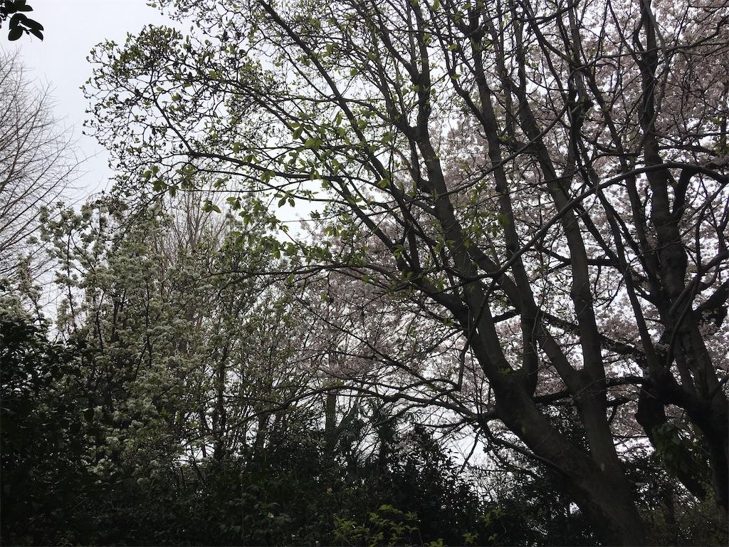 f:id:TokuheiKumagai:20200401004947j:image