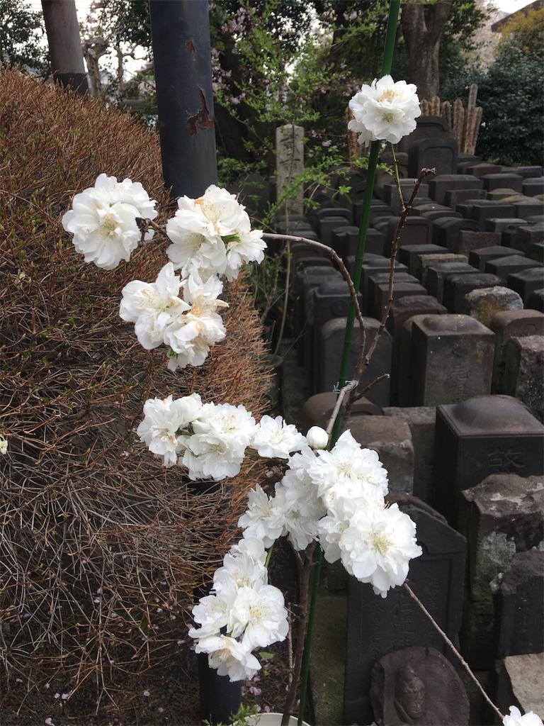 f:id:TokuheiKumagai:20200401004957j:image