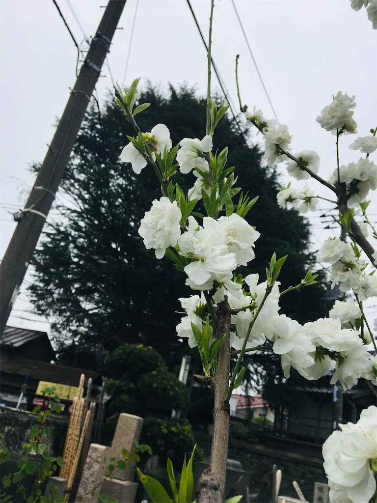 f:id:TokuheiKumagai:20200401005011j:image