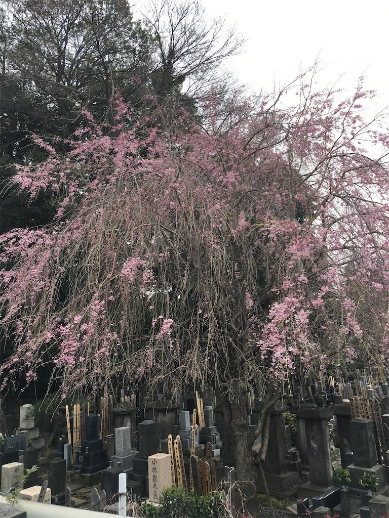 f:id:TokuheiKumagai:20200401005030j:image
