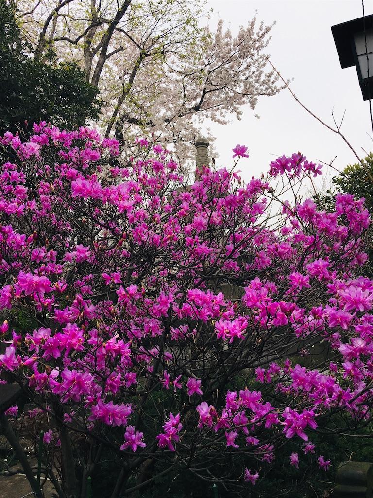 f:id:TokuheiKumagai:20200401005041j:image