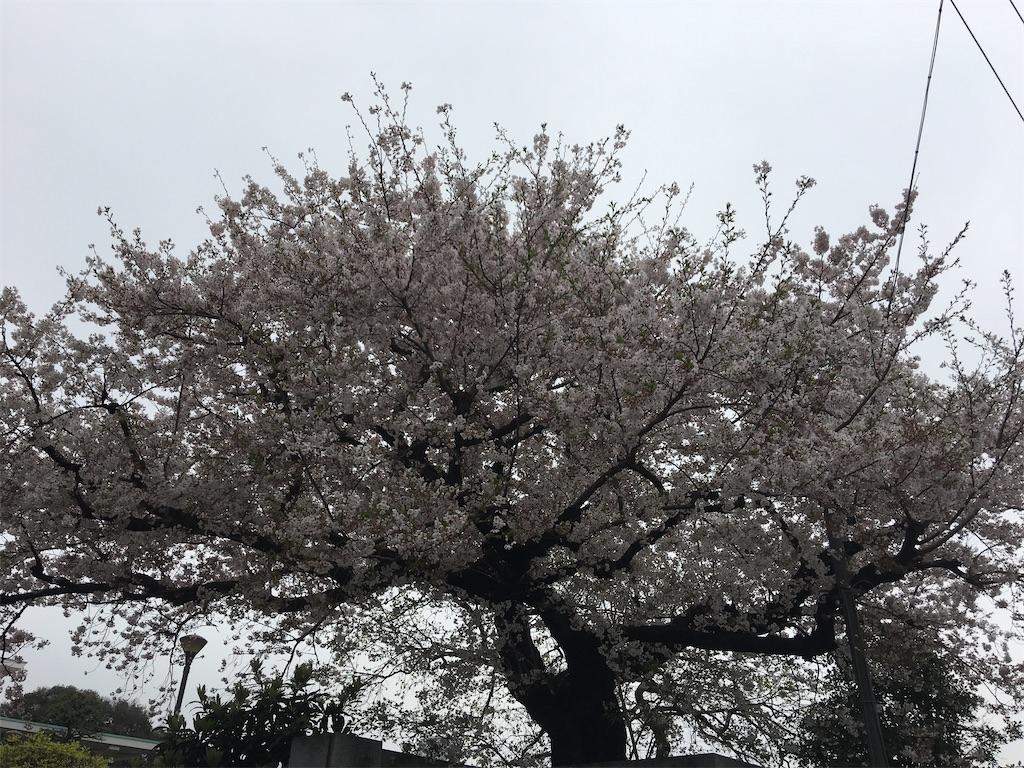 f:id:TokuheiKumagai:20200401005050j:image