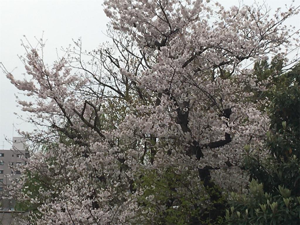 f:id:TokuheiKumagai:20200401005057j:image