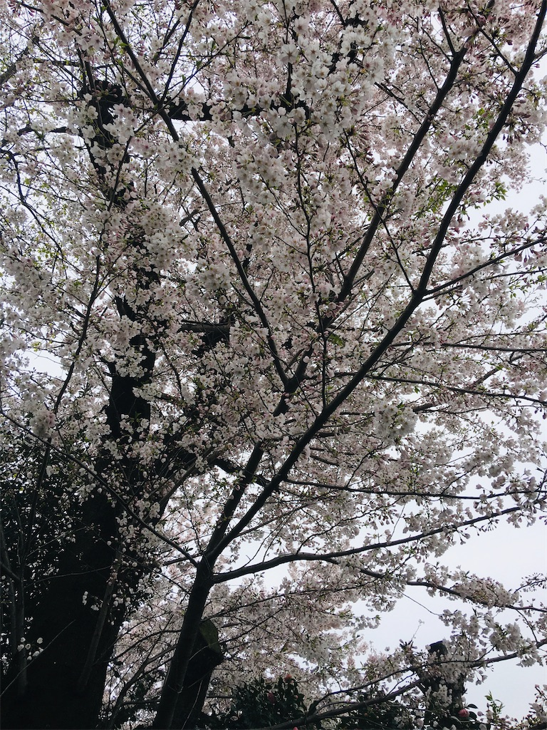 f:id:TokuheiKumagai:20200401005108j:image