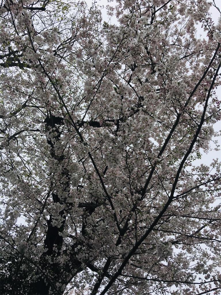 f:id:TokuheiKumagai:20200401005119j:image