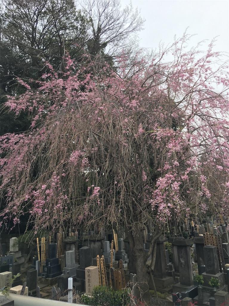 f:id:TokuheiKumagai:20200401005128j:image