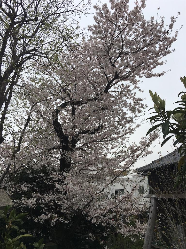 f:id:TokuheiKumagai:20200401005132j:image