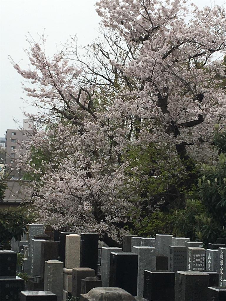 f:id:TokuheiKumagai:20200401005152j:image