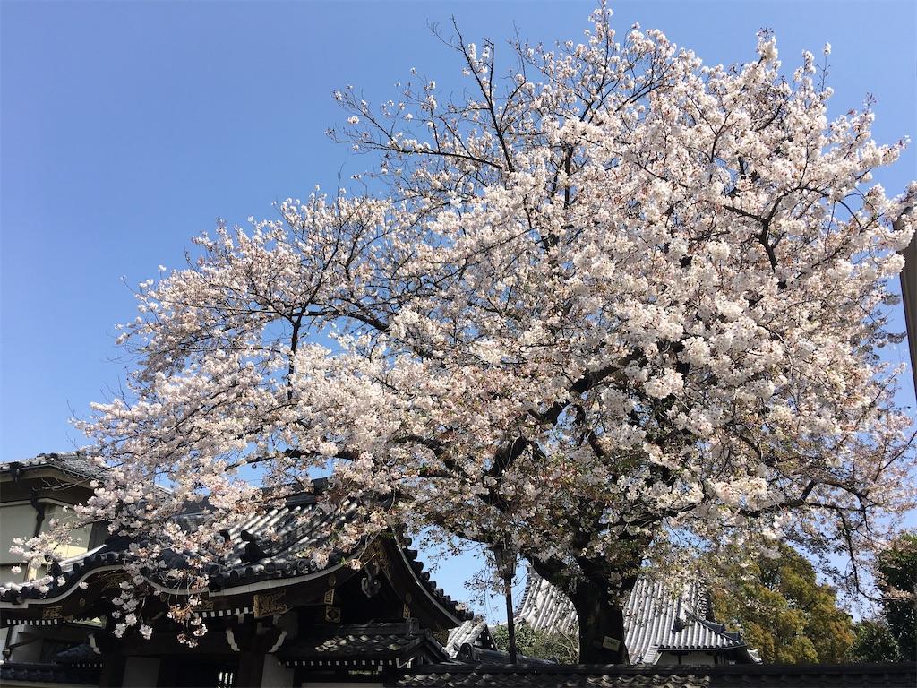 f:id:TokuheiKumagai:20200402151904j:image