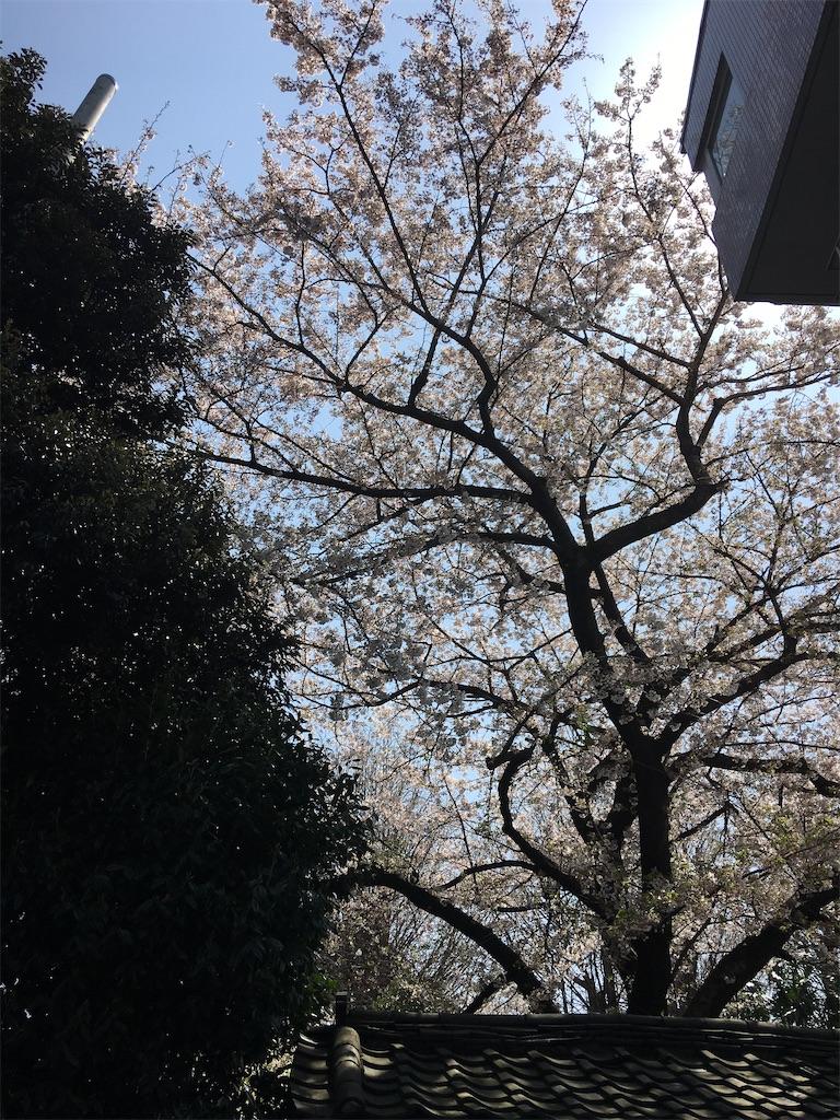 f:id:TokuheiKumagai:20200402151909j:image