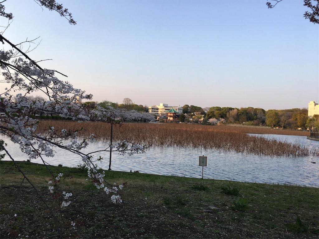 f:id:TokuheiKumagai:20200402193710j:image