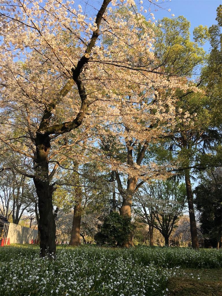 f:id:TokuheiKumagai:20200402193928j:image