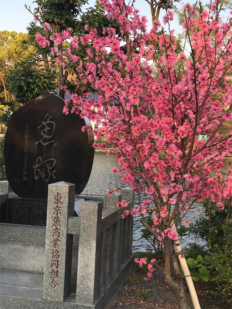 f:id:TokuheiKumagai:20200402194037j:image