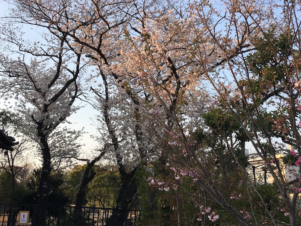 f:id:TokuheiKumagai:20200402194046j:image