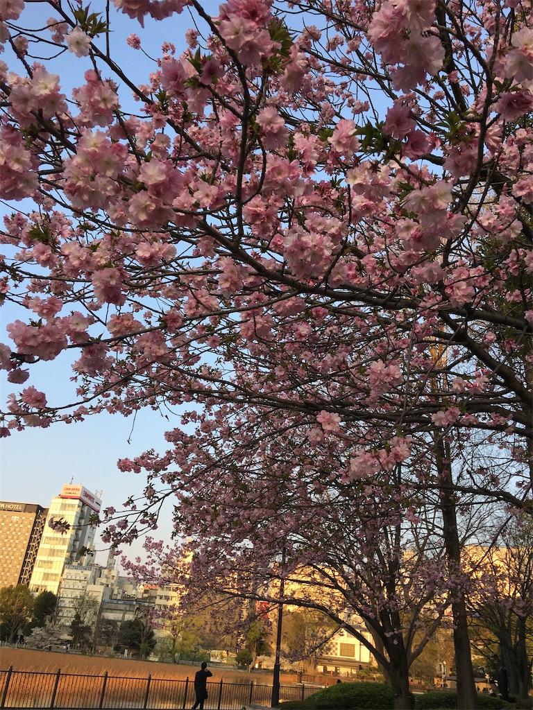 f:id:TokuheiKumagai:20200402194103j:image