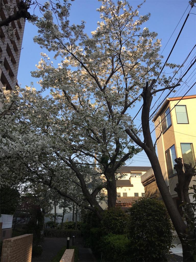f:id:TokuheiKumagai:20200402194132j:image