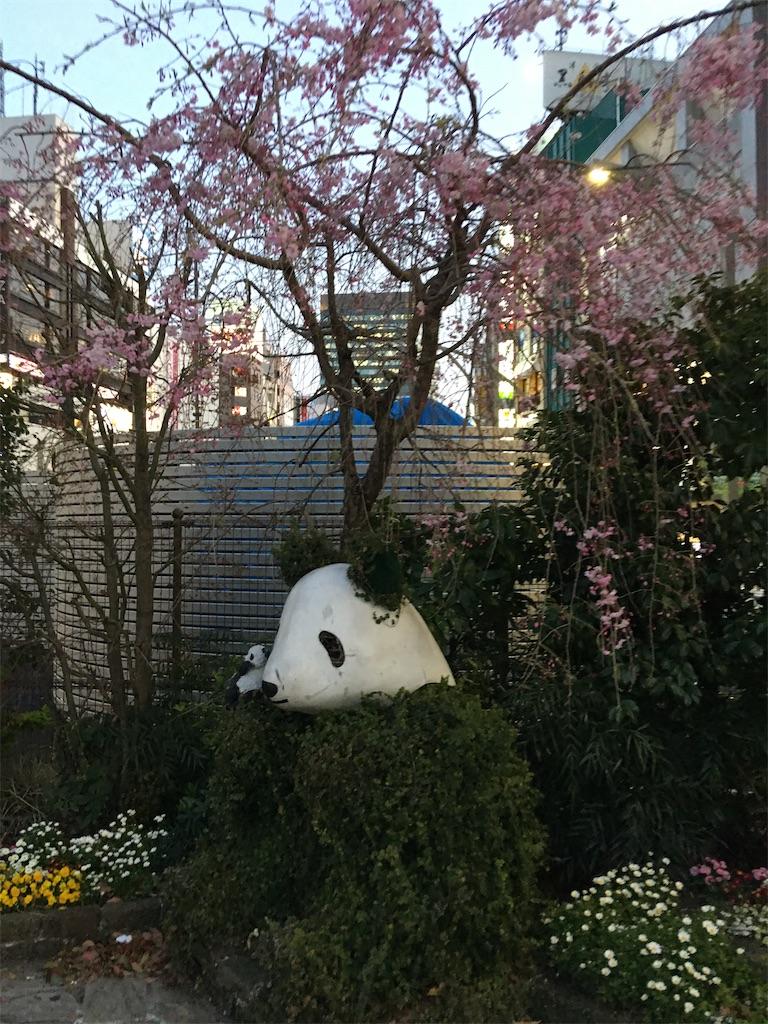 f:id:TokuheiKumagai:20200402194157j:image