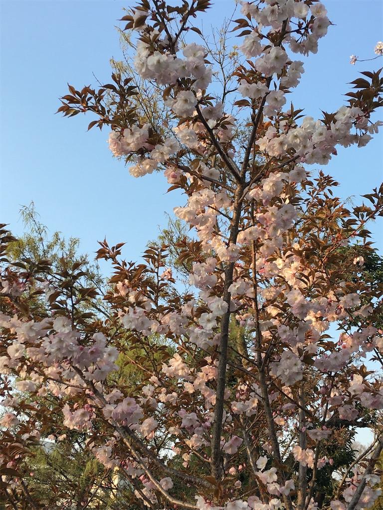 f:id:TokuheiKumagai:20200402194607j:image