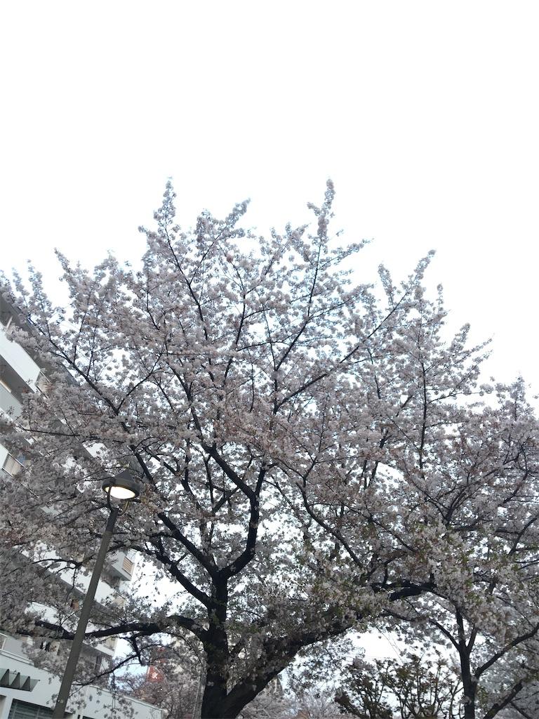 f:id:TokuheiKumagai:20200403212115j:image