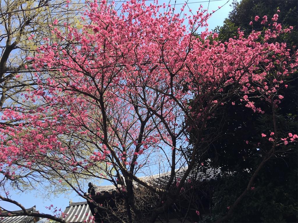 f:id:TokuheiKumagai:20200404212257j:image