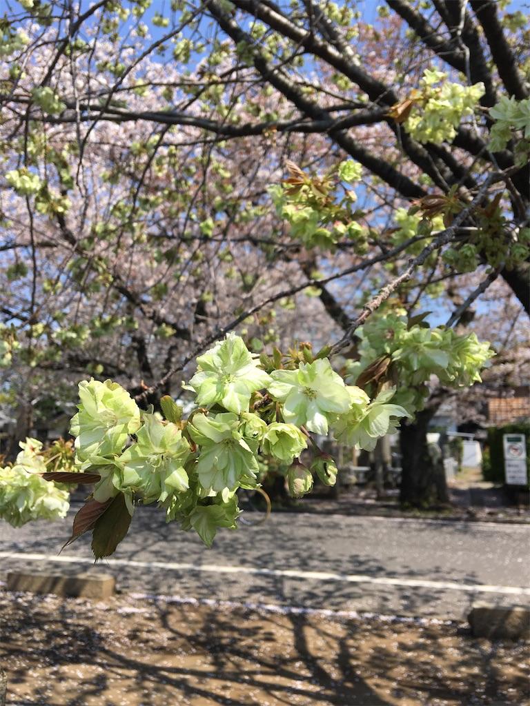 f:id:TokuheiKumagai:20200404212302j:image