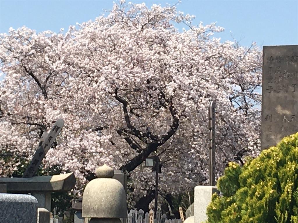 f:id:TokuheiKumagai:20200404212336j:image